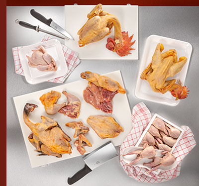 cani-avicunicole-anatra-oca-macelleria-ristorazione